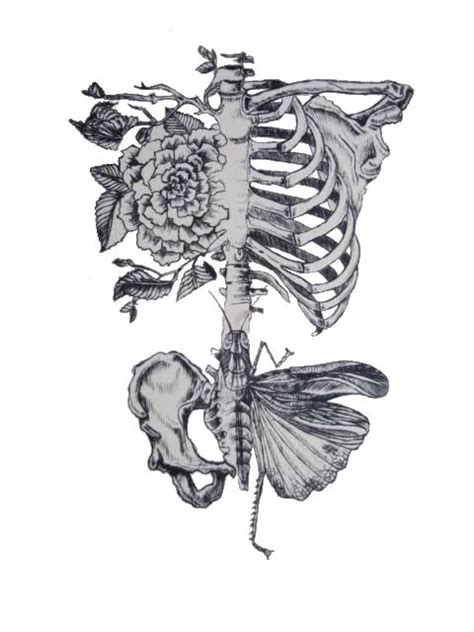 Rib Roses Butterfly Pelvis Skeleton Drawing Art