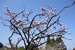 2013高山青.戀戀阿里山_Day2-沼平公園@用相片記錄人生|PChome 個人新聞台