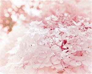 Pastel Pink Valentines Hydrangeas Botanical Nature Shabby Chic