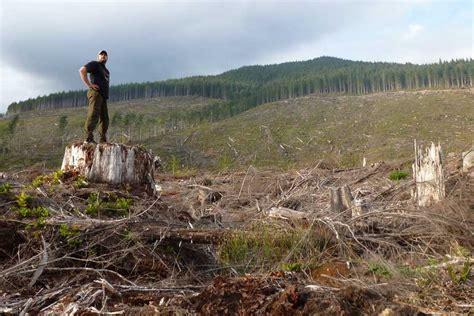 wo die bäume in den himmel wachsen work travel in kanada kletterblatt