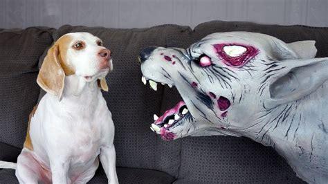 zombie dog  cute dog maymo youtube