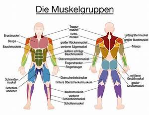 Muscle Diagram German Text Male Body Stock Vector