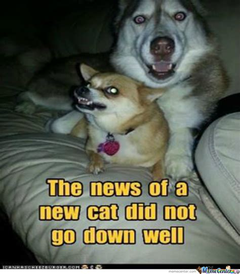 New Cat Memes - the news of a new cat did not go down well by brian poole