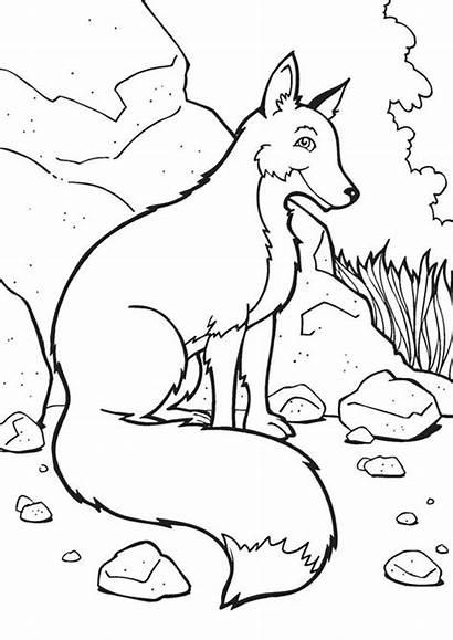 Fox Coloring Amoung Printable Sheets Easy Bulkcolor