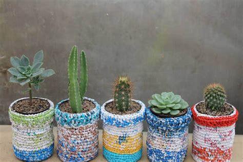 mini cactus cactus miniatures particularit 233 s ooreka