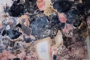 les moisissures sur les murs dangereuses pour notre sante With champignons sur les murs interieurs