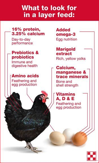 How to Switch to a Chicken Layer Feed | Purina Animal ...