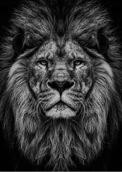 Lion Head Displate Poster Lockscreen Phone Wild