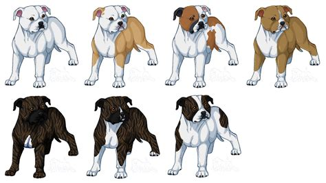 american bulldog colors american bulldogs bully type by novablue on deviantart
