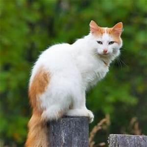 Katzen Aus Garten Vertreiben : katzen vertreiben erfolgreiche mittel zur katzenabwehr ~ Frokenaadalensverden.com Haus und Dekorationen