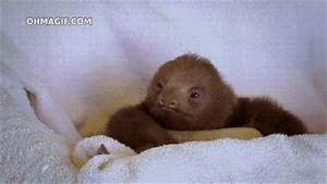 Two-Toed Baby GIF - Find & Share on GIPHY