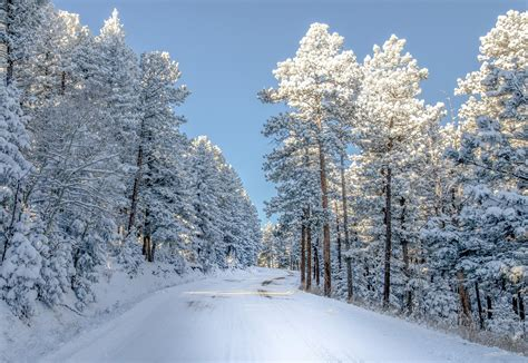 Background Images Snow by Snow Colorado Trees Winter Nature Wallpaper 2000x1379