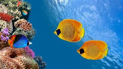 Fish 4k 8k Island 5k Costa Diving