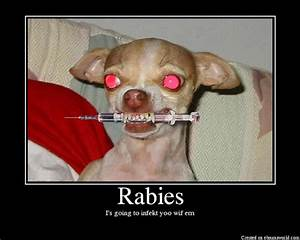 rabies symptoms and treatment in humans