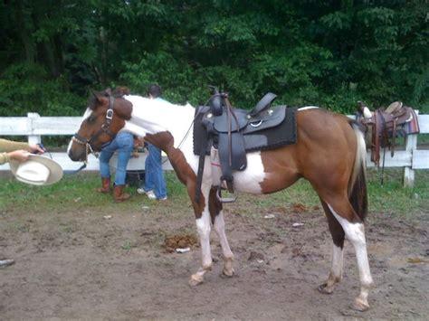 cheap horses horse gift