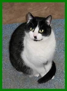Katze Kotzt Viel : meine katze ist viel zu dick und hat immer hunger seite 2 ~ Frokenaadalensverden.com Haus und Dekorationen