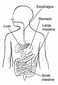 Digestive System Diagram For Kids To Label