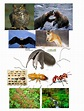 Food chain - Giant Anteaters!