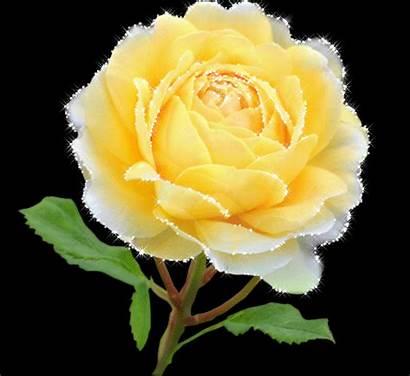 Gifs Flores Rose Roses Rosa Fleurs Flowers