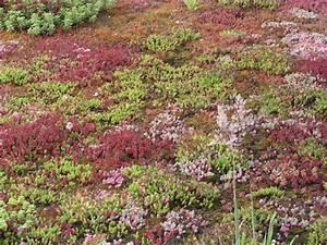 Extensive Dachbegrünung Pflanzen : dachbegr nung little green planet ~ Frokenaadalensverden.com Haus und Dekorationen