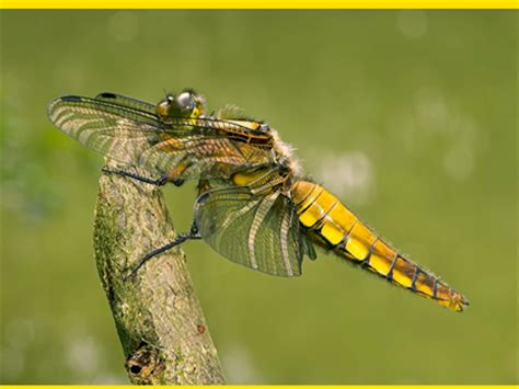 mosquito chasers tips for insect photography national insect week