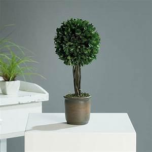 Buchsbaum Im Topf : buchsbaum buchs baum buxbaum dekoration 34cm terrakotta ebay ~ A.2002-acura-tl-radio.info Haus und Dekorationen
