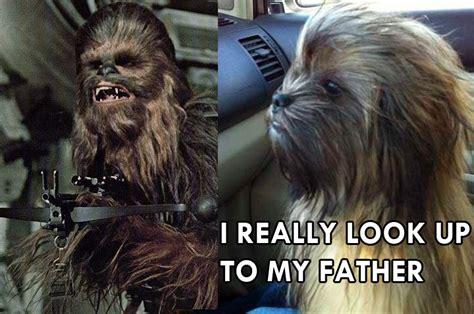Chewbacca Memes - chewbacca dog meme
