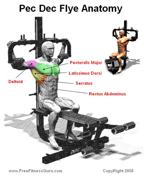 pec deck fly muscles worked chest gymhard