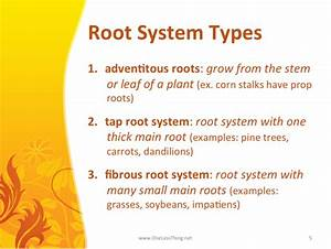Plant Science  Powerpoint Downloads