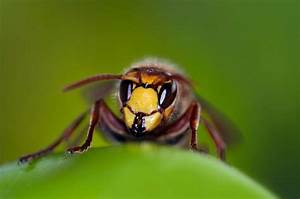 Was Vertreibt Wespen : wespen vertreiben wespenstich vermeiden hausmittel ~ Articles-book.com Haus und Dekorationen