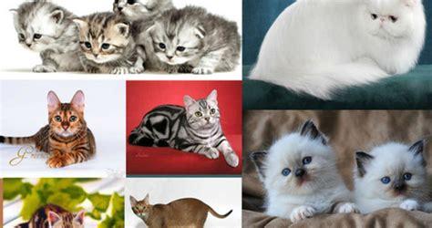 สัตว์เลี้ยงตัวเล็กที่คนนิยมเลี้ยง   konrukmeaw สัตว์เลี้ยง ...
