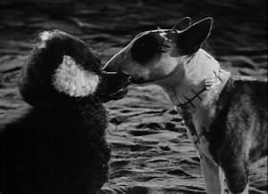 Frankenweenie Screencaps - Tim Burton Image (13736781 ...