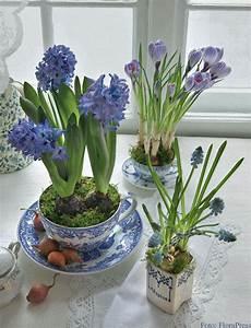 Geschirr Mit Blumen : hyazinthen krokus und traubenhyazinthen in blauen tassen foto florapress flowers ~ Frokenaadalensverden.com Haus und Dekorationen