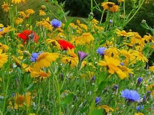 When Do Flowers Bloom in Charleston, SC? - ProFlowers Blog