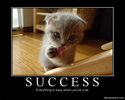 Success Cat Meme - success demotivational poster fakeposters com