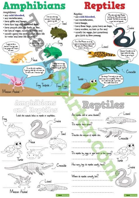 hibians and reptiles worksheets and posters pack