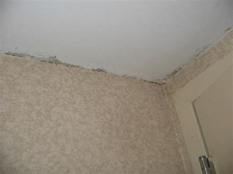 Black Mold Along Ceiling Line