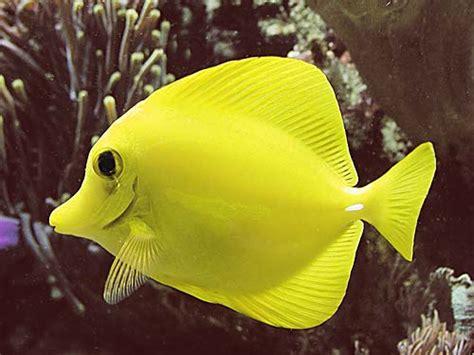 poissons marins vente magasin uniquement poissons en aquarium r 233 cifal pierres vivantes aux