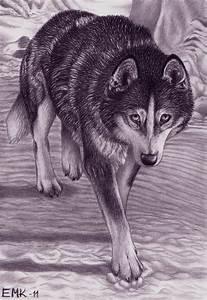 Alaskan Husky Shy Step By Elkenar On Deviantart