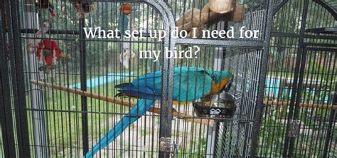 What Do I Need To Put On My Resume by How To Setup A Parrot Cage Buying A Cage Size Location