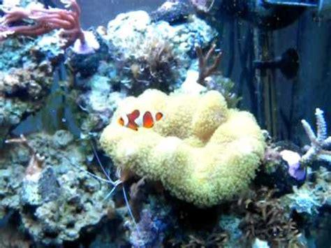 filtre aquarium eau de mer aquarium r 233 cifal eau de mer juwel lido 120l 6mois