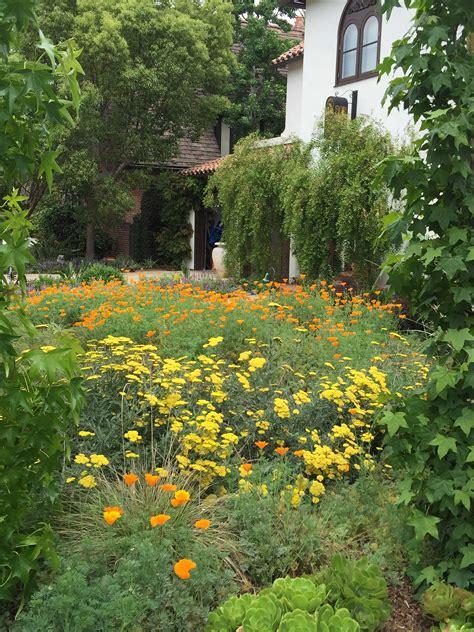 drought resistant garden garden the greater wilshire neighborhood council
