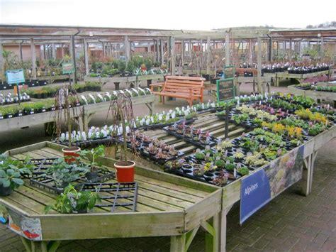 plant display  downtown garden centre  trevor rickard