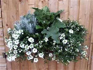 Fleur D Hiver Pour Jardinière : composer de jolies jardini res quelques id es de composition ~ Dailycaller-alerts.com Idées de Décoration