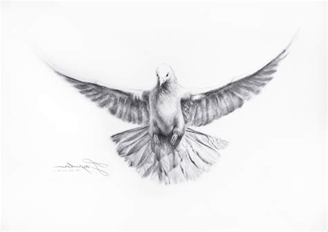 Pictures of Simple Dove Drawings Pencil - #catfactsblog