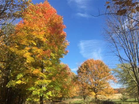why do leaves change color in fall why do leaves change color in the fall vermont radio