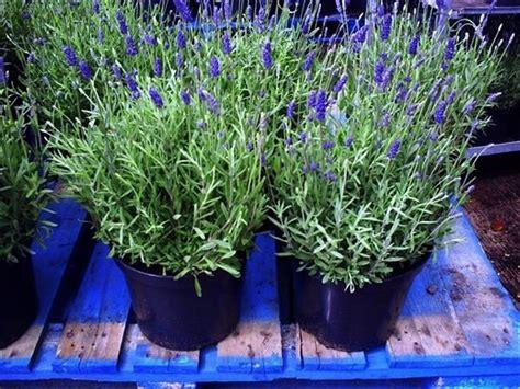 fiori da mettere sul balcone quali piante mettere sul balcone lettera43 it