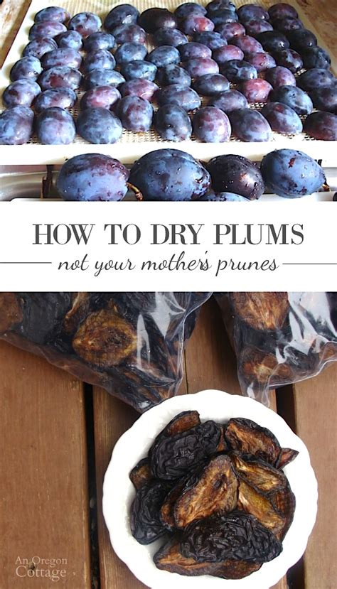 How To Dry Plums  An Oregon Cottage. How Many Side Tables In Living Room. Ikea Living Room Furniture Glasgow. Living Room Painting Ideas Asian Paints. Living Room Windows Images. Formal Living Room Suites. Living Room Meaning In English. Oversized Swivel Chairs Living Room. Living Room Furniture From China