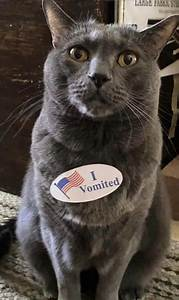 cats wearing 39 i vomited 39 stickers make elections worth it