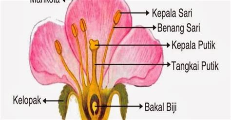 morfologi bunga bagian bunga